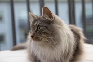 Catshark-11