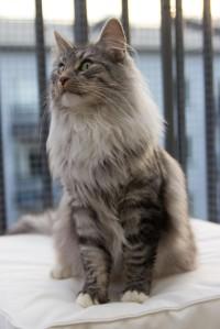 Catshark-12
