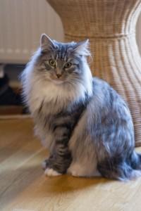Catshark-15