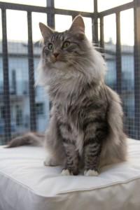 Catshark-8