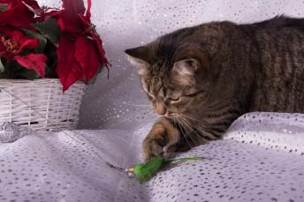 Catshark-2